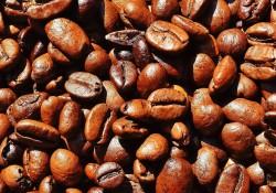 caffe morettino intervista master istud